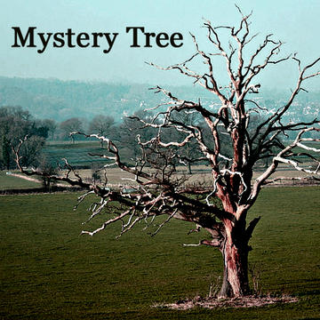 Mystery Tree, by Mark Kaufman on OurStage
