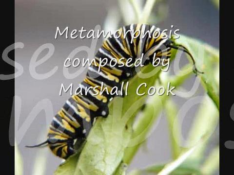 Metamorphosis, by The Marshall Cook Project on OurStage